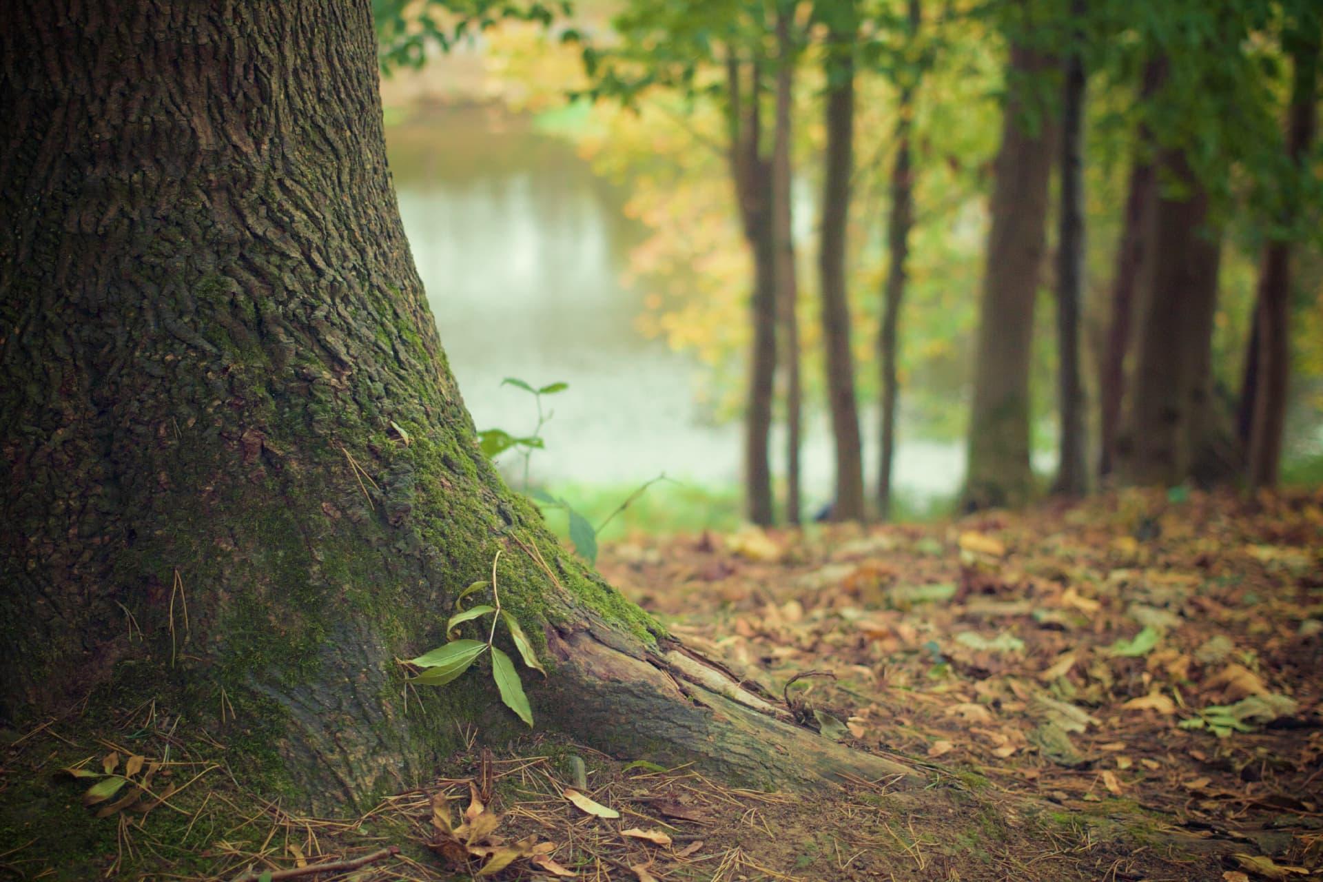 Kaminholz Breuer | Nachhaltigkeit und Umweltschutz | Forstwirtschaft