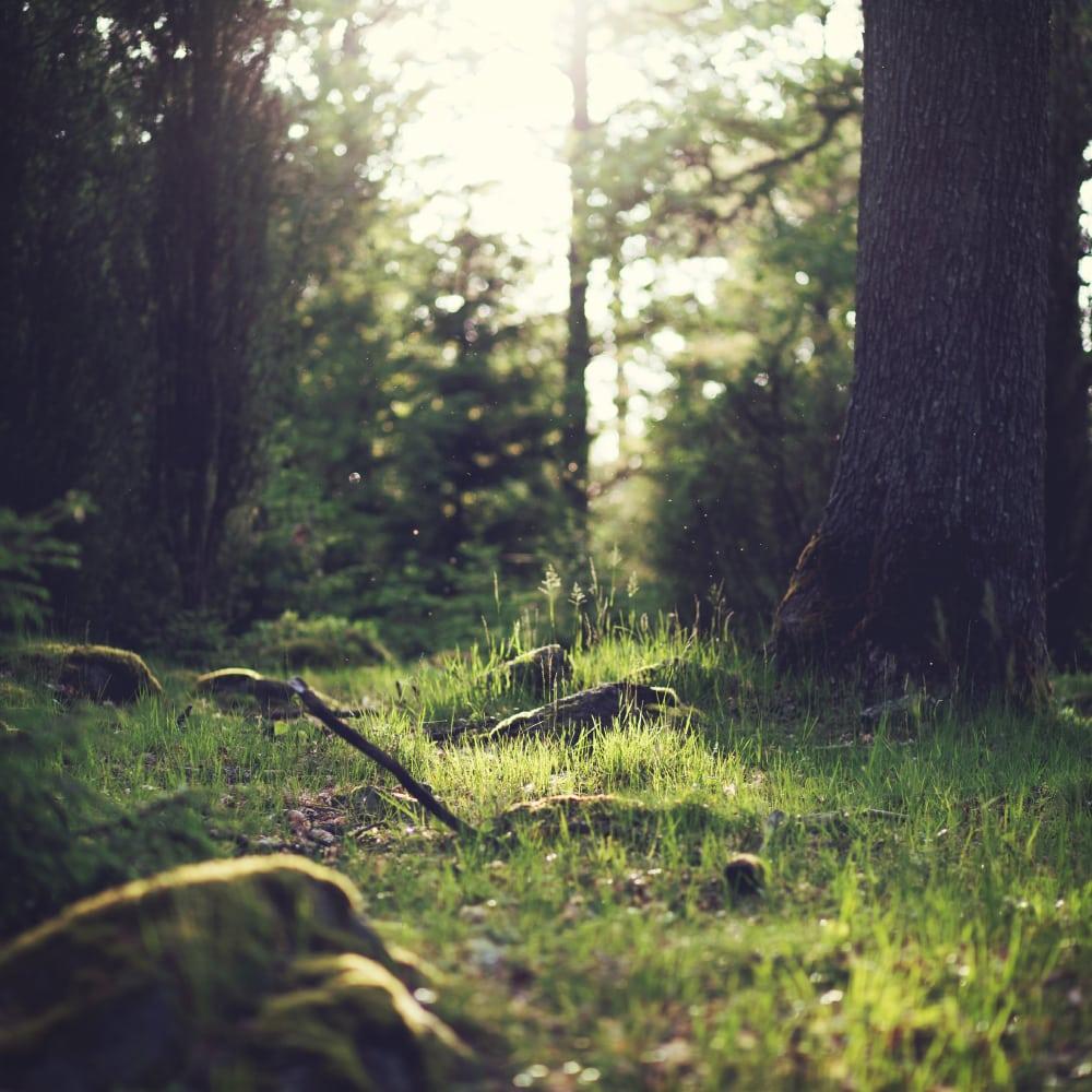 Kaminholz Breuer | Stiftung Unternehmen Wald