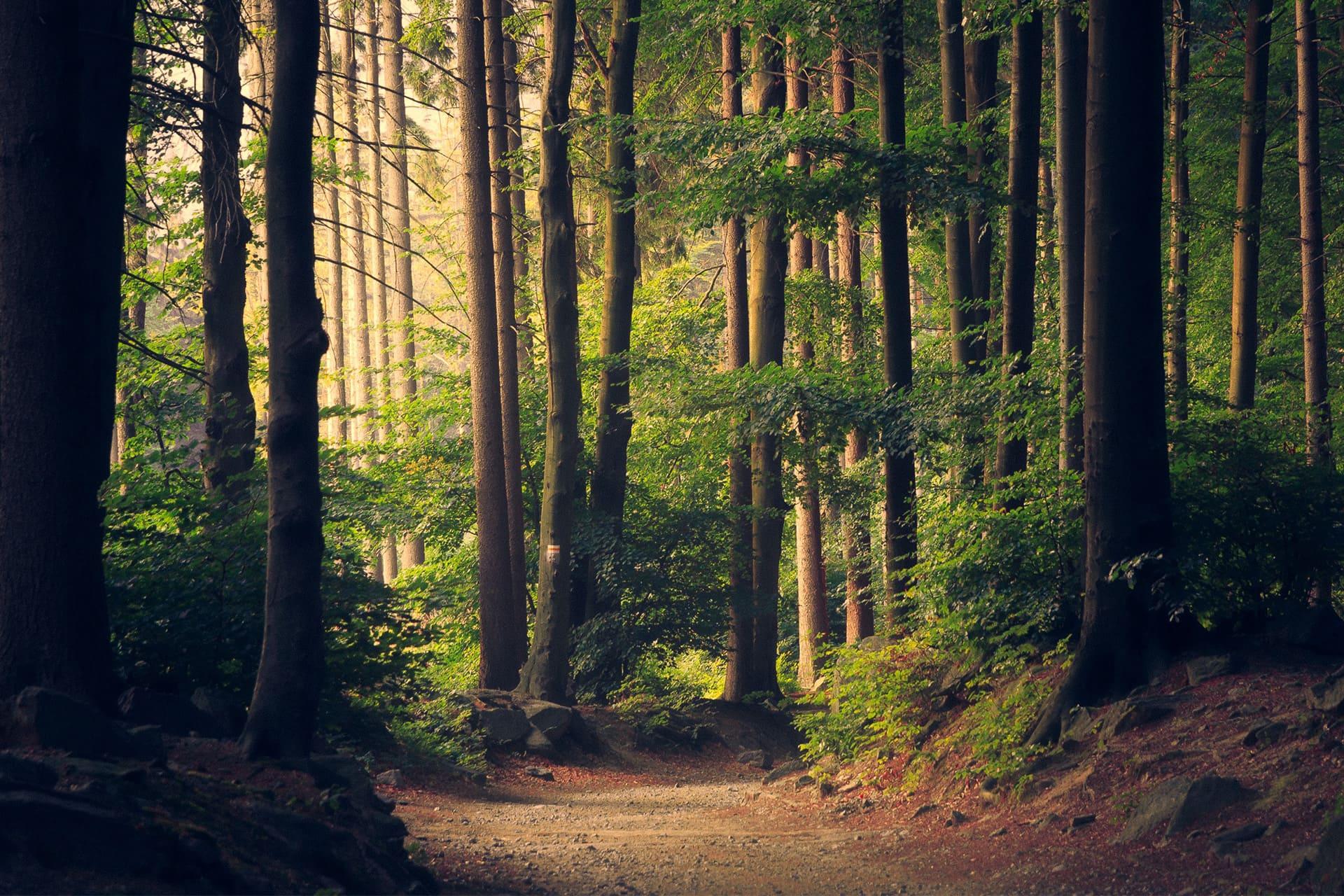 Kaminholz Breuer | Nachhaltigkeit durch Aufforstung | Wald