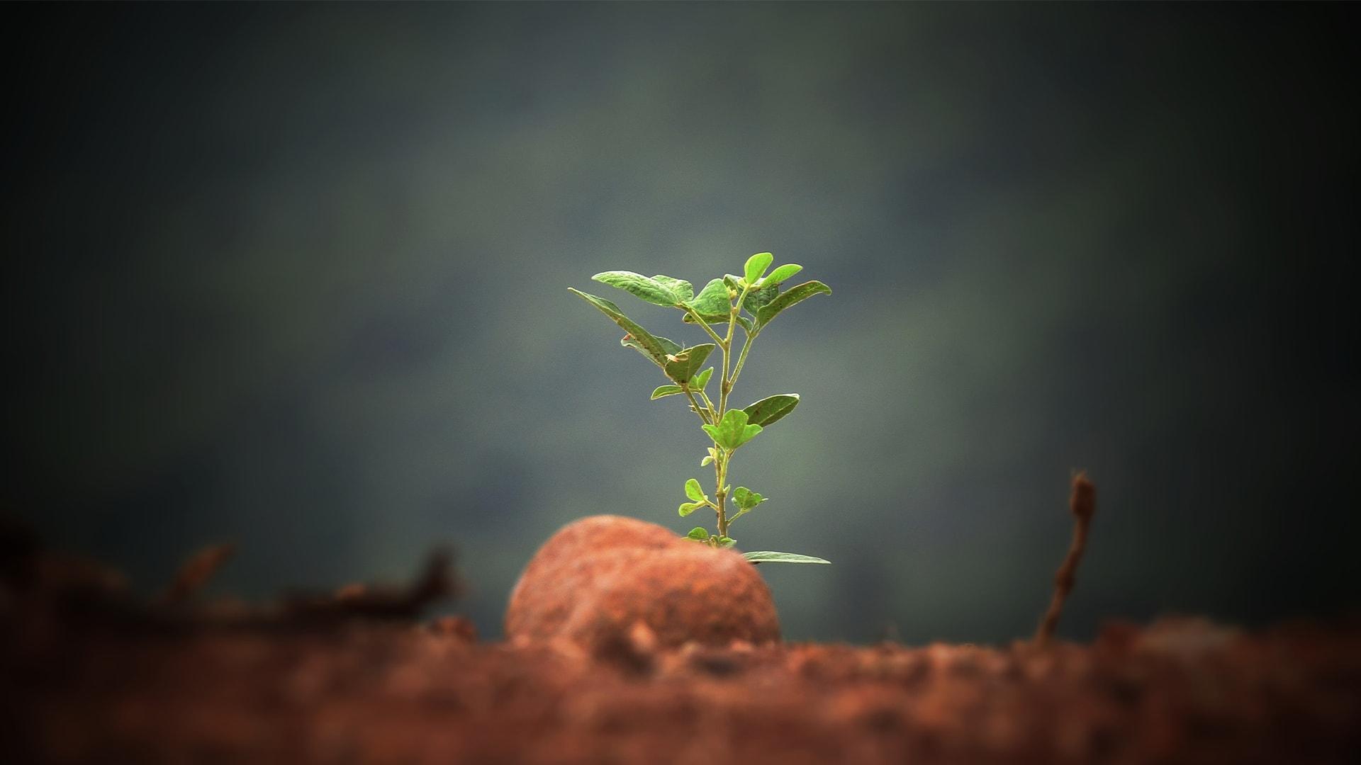 Kaminholz Breuer | Nachhaltigkeit durch Aufforstung | Sprössling